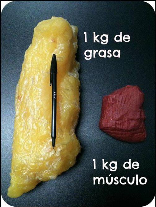 Grasa y músculo